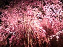 新潟市ネイルサロン aura pro ~megumi流 ネイルライフ~-20100410203835.jpg