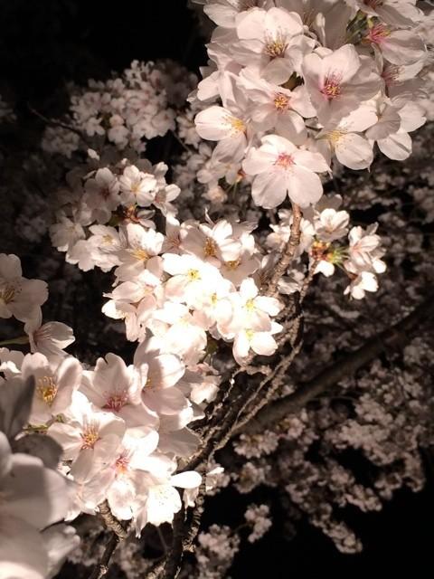 ??Cherry blossom??